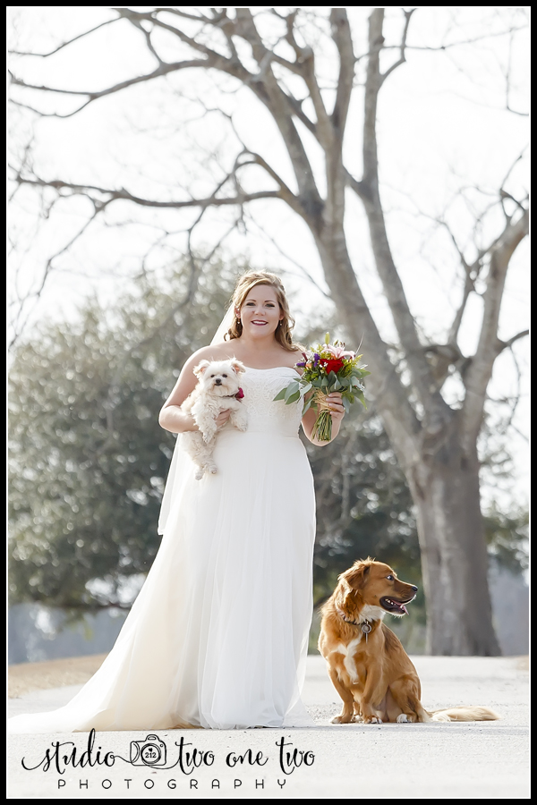 Bride with her dogs